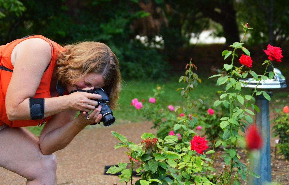 A woman takes photos in a rose garden.