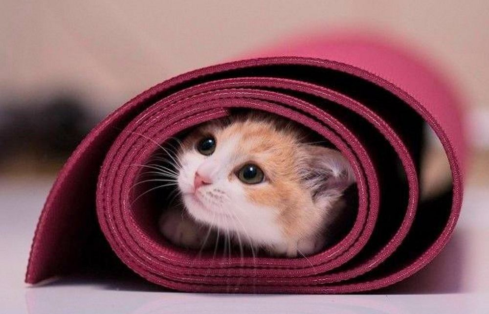kitten on a yoga mat