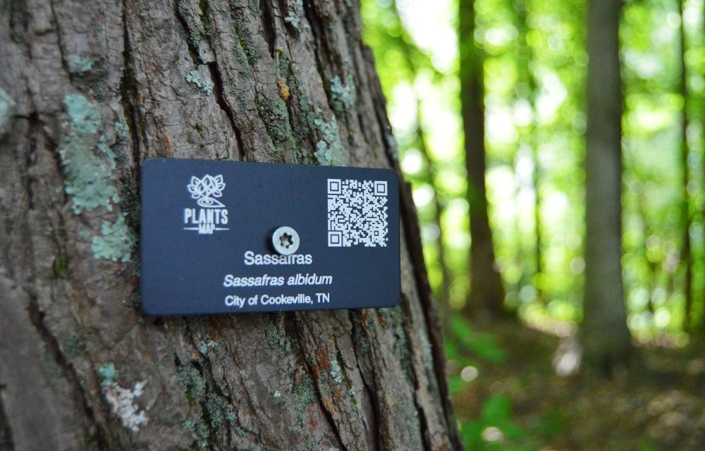 A sassafras tree is labeled at Cane Creek Park.