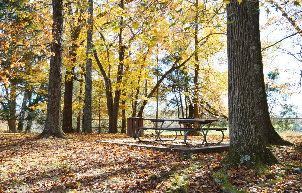 A picnic table at Cane Creek Park.