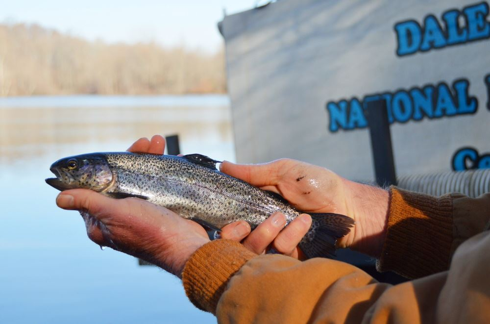 rainbow trout at Cane Creek Park